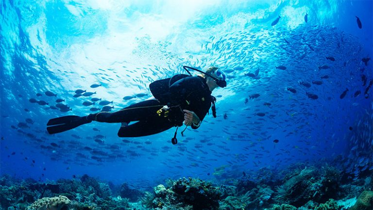What You Need To Know As A Beginner Scuba Diver?