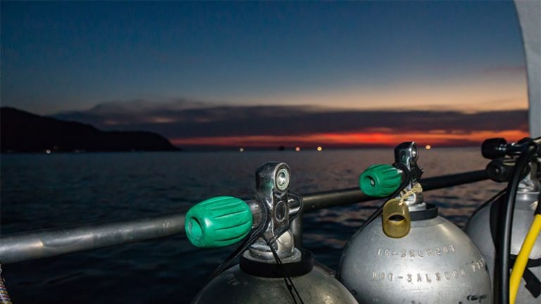 What Are The Advantages Of Doing A Night Scuba Dive