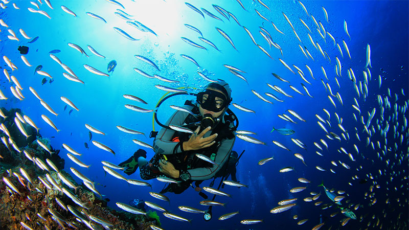 Top 10 Scuba Dives In Maui