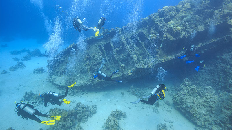 Top 10 Scuba Dives In The Red Sea