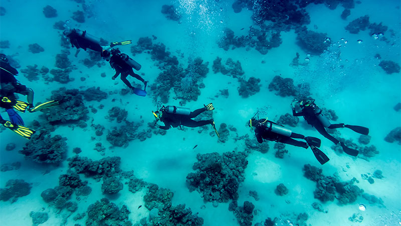 Top 10 Scuba Dives In Egypt